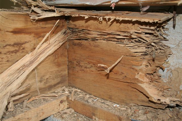 Top 3 Ways to Prevent Subterranean Termites